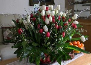 80 lalele-tulips tx