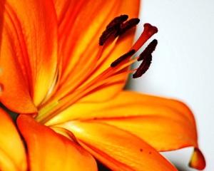 portocaliu-  orange